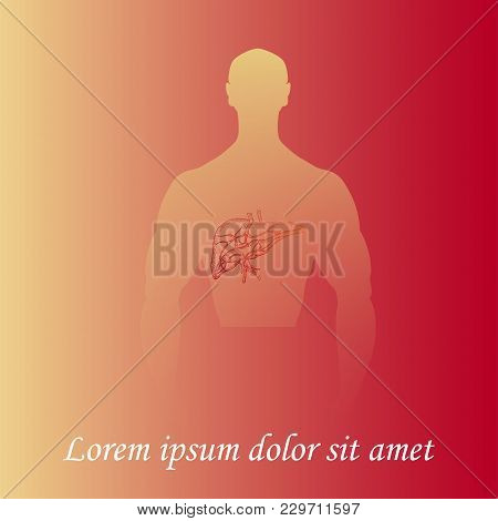 Silhouette Of A Man Torso With Hand Drawn Liver. Gradient Background. Space For Text. Human Anatomy