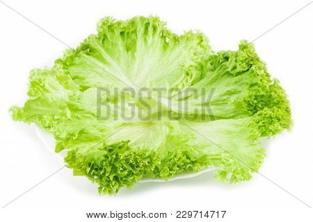 Leaf Of Lettuce On White Plate.top View. Isolated.