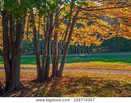 Golden Leaves And Green Grass In This Autumn Landscape In Freehold New Jersey.