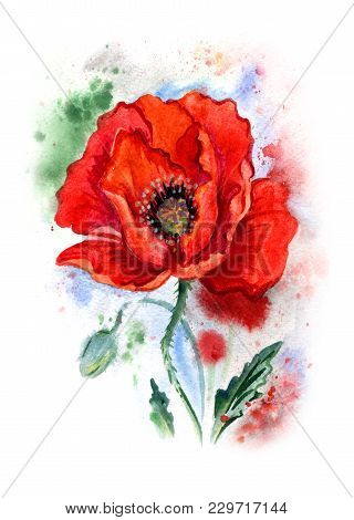Red Poppy In An Expressive Manner, Watercolor Drawing.