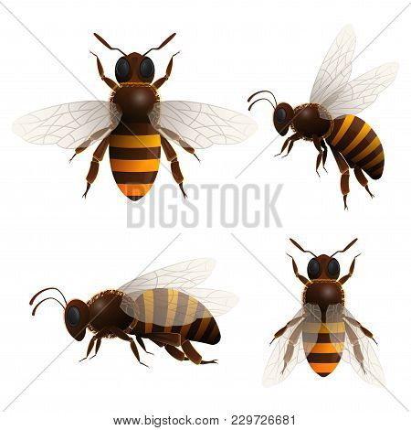 Honeybee Isolated Set On White Background. Striped Flying Bee In Front And Side View Illustration In