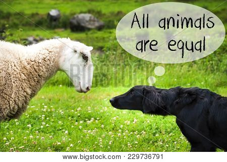 Dog Meets Sheep With Speech Balloon. English Text All Animals Are Equal. Green Grass Meadow In Norwa