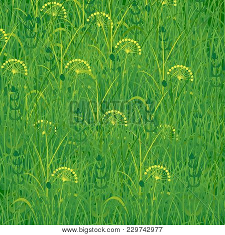 Background Of Grass. Plants Meadows And Fields. Concept Summer, Nature, Freshness Relaxation