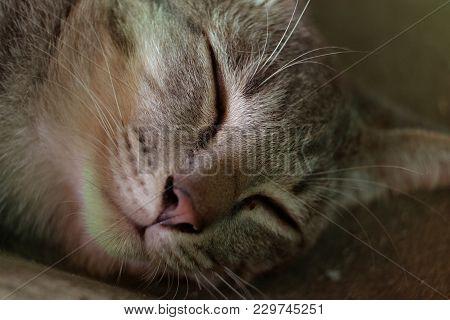Closeup Of Head Of A Sleeping Cat