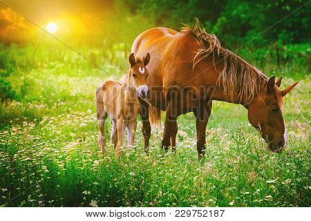 Beautiful Unicorns Mare And Foal In The Magical Forest Landscape At Sunset, Realistic Picture. Unico