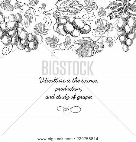 Typography Decorative Design Card Doodle With Inscription That Viticulture Is Science, Production An