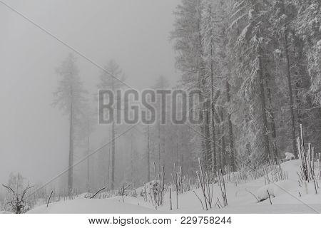 Solitude minimalist winter landscape. poster