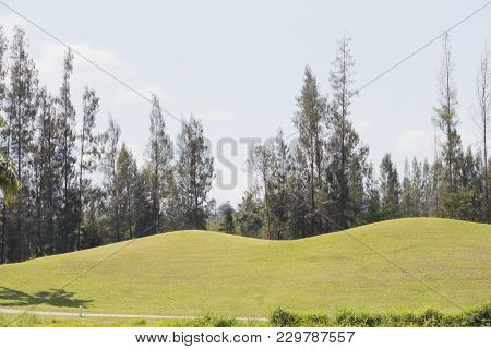 Grass Pitch In The Field And Pine.