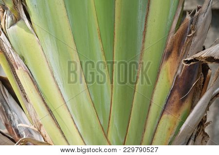 Close Up Shot Of Palm Leaf As Background