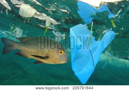 Fish swims among plastic ocean pollution. Seafood contamination problem