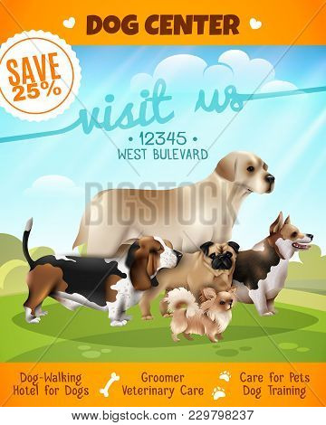 Colored Dogs Walking Poster Or Flyer With Dog Center Visit Us And Sale 25 Percent Descriptions Vecto