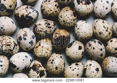 Group of quail eggs with dark spots laying together tightly. Nutrition source. Proteins.
