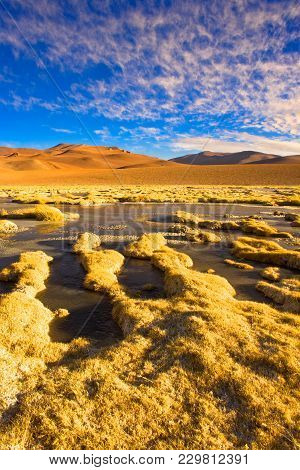 Vegas De Quepiaco Salt Lake And Lagoon In The Altiplano (high Andean Plateau) At An Altitude Of 4400