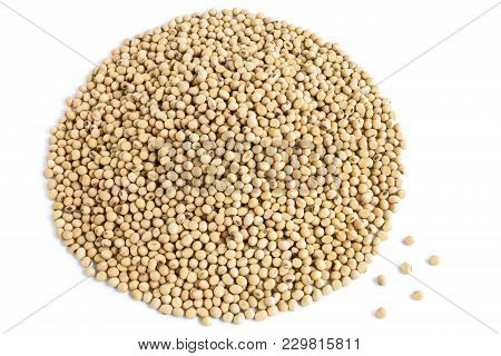 A Lot Of Soybeans Pile Isolated On White Background With Copy Space For Text. Concept Food For Healt