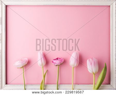 Pink Flowers On A Pink Background. Studio Shot. Flat Lay. Copy Space.