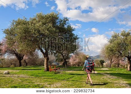 A Young Girl With A Big Backpack Goes To Rest On A Bench Under The Old Olive Tree, Cyprus.