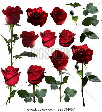 A Set Of Red Roses. Four Roses From Different Angles And Separately Heads Of Roses And Leaves Of Ros