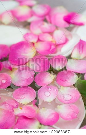 Botany, Environment, Treatment Concept. Marvelous Petals Of Bright Pink Colour Are Floating On The S