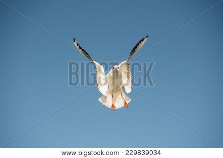 Single Seagull Flying In Blue A Sky