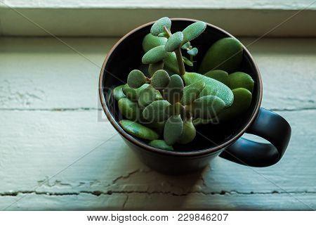 Alternative, creative,  hipster flowerpot on a vintage windowsill