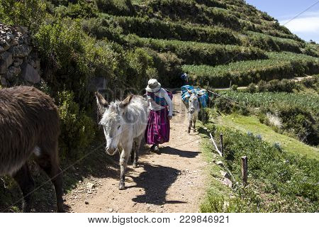 Isla Del Sol, Bolivia - January 7, 2018: Unidentified Woman With Donkeys On Isla Del Sol On Titicaca