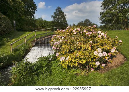 Rhododendrons In Bloom With Pond At Crystal Springs Rhododendron Gardens, Oregon
