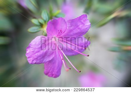 Gorgeous Violet Flower Close Up High Quality Stock Photo