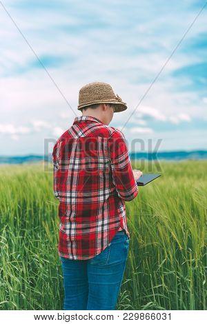 Farmer Using Digital Tablet In Wheat Crop Field, Concept Of Responsible Modern Smart Farming By Usin