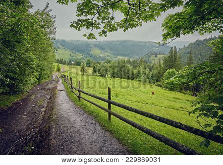Composite Landscape. Fence Near The Cross Road On Hillside Meadow In Mountains. Few Fir Trees Of For