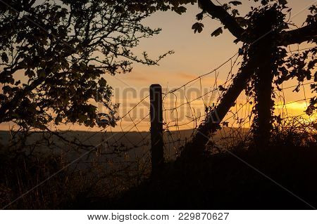 A Tree And Wire Fence With Fence Post Silhouetted Against A Red Sky At Sunset