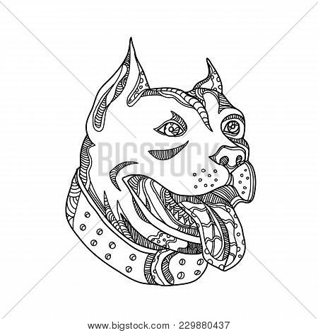 Doodle Art Illustration Of Head Of Pit Bull,american Pit Bull Terrier, American Staffordshire Terrie