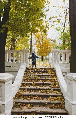Little Child Boy In Blue Clothes Walk In Fall Park, Climb Up Stairs With Dry Yellow Autumn Leaves. S