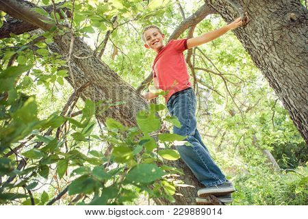Happy smiling boy  in a tree