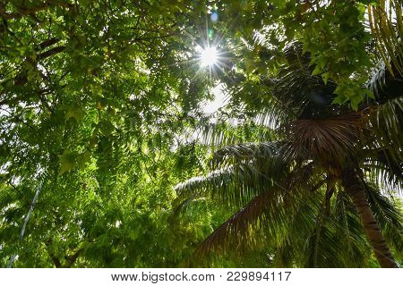 Sun Shine Through The Branch And Leaf Of Tree With Flare Effect,over Flare