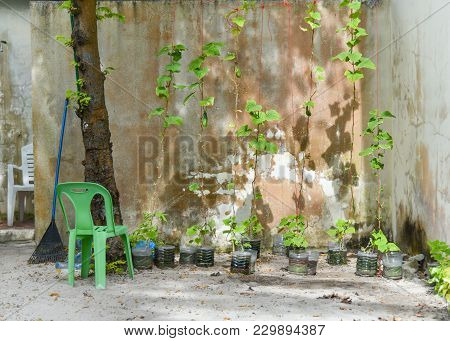 Green Chair In The Garden For Relax. Green Garden And Patio Terrace In House. Classic Garden With Gr