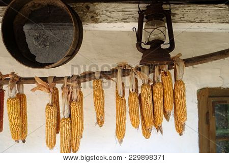 Sweetcorn hung up for drying