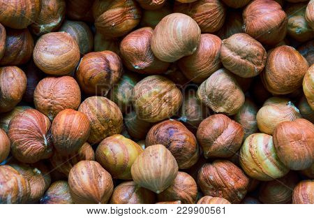 Hazelnut Heap Closeup. Hazelnut Close Photo Background. Organic Food Rustic Banner Template. Healthy
