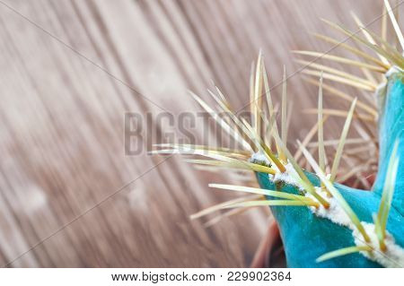 Cactus Needles On Wooden Background, Top View. Blue-green Cactus With Yellow Long Needles. Close-up.