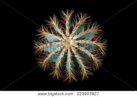 Spiny Spherical Cactus On Black Background. Stylish Ribbed Echinocactus With Long Yellow Needles, Th