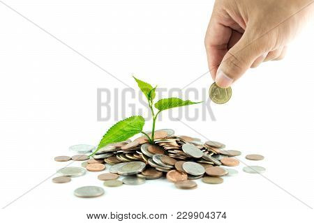 Trees Growing On Coins / Business With Csr Practice. Male Hand Putting Money Coin Stack Growing Busi