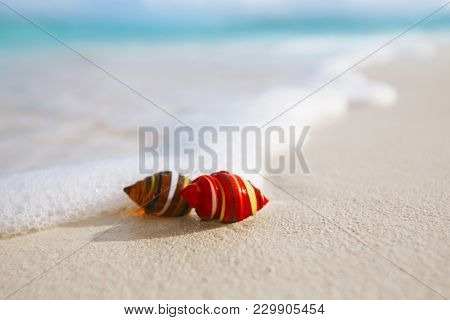 glass tropical sea  shell with waves under sun light, live action