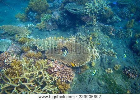 Tropical Fish And Table Coral. Exotic Island Sea Shore. Tropical Seashore Landscape Underwater Photo