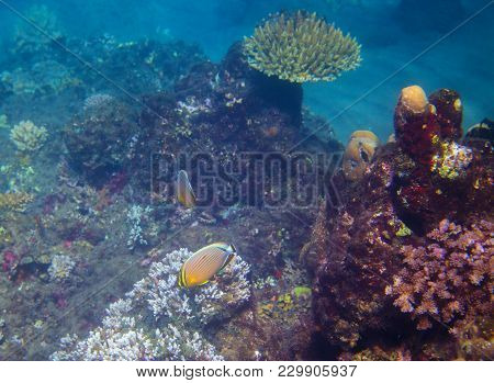 Yellow Coral Fish In Reef. Exotic Island Sea Shore. Tropical Seashore Landscape Underwater Photo. Co