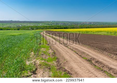 Landscape With An Earth Road Between Wheat And Flowering Rape Agricultural Fields In Central Ukraine