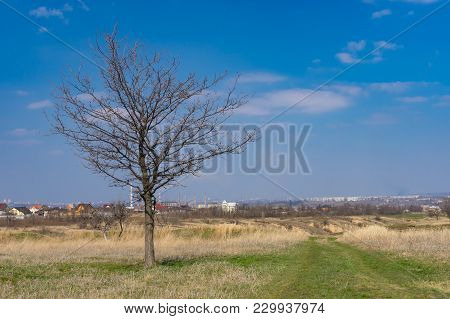 Seasonal Landscape With Earth Road And Lonely Oak On The Roadside In Outskirts Of Dnipro City, Ukrai