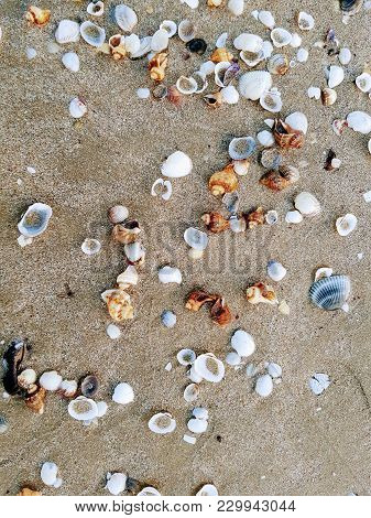 Summer Backgrounds, Seashell On The Beach With Wet Sand