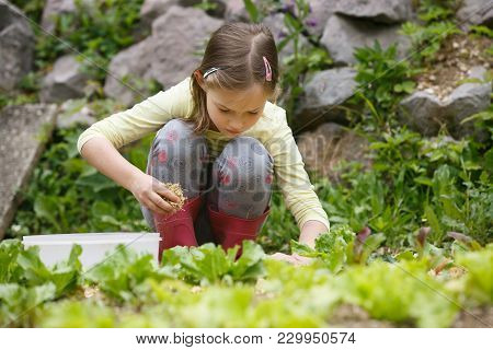 Little Girl Holding A Handful Of Straw Mulch And Protecting Garden Bed Against Drought. Natural Chil