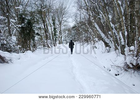 Man Walking In A Forest With Snow Covered Trees