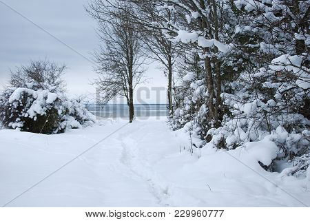 Winter View With Snow Covered Trees By The Coast