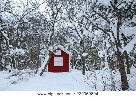 Red Cabin In A Swedish Winter Landscape